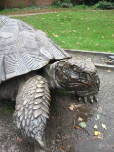 Tortoise in Holland Park