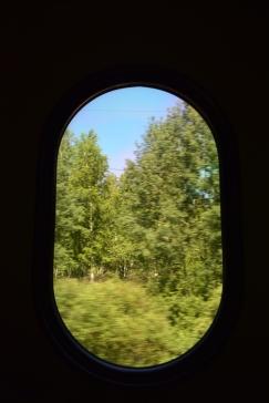 Trees, trees so many trees!